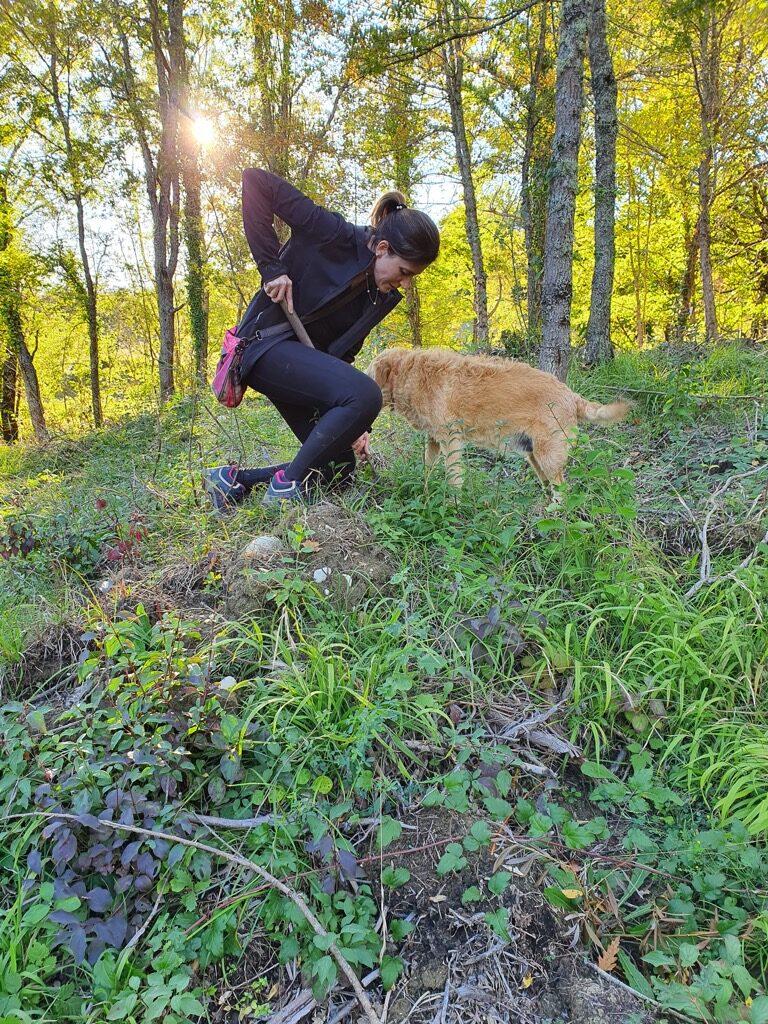cane tartufo nel bosco