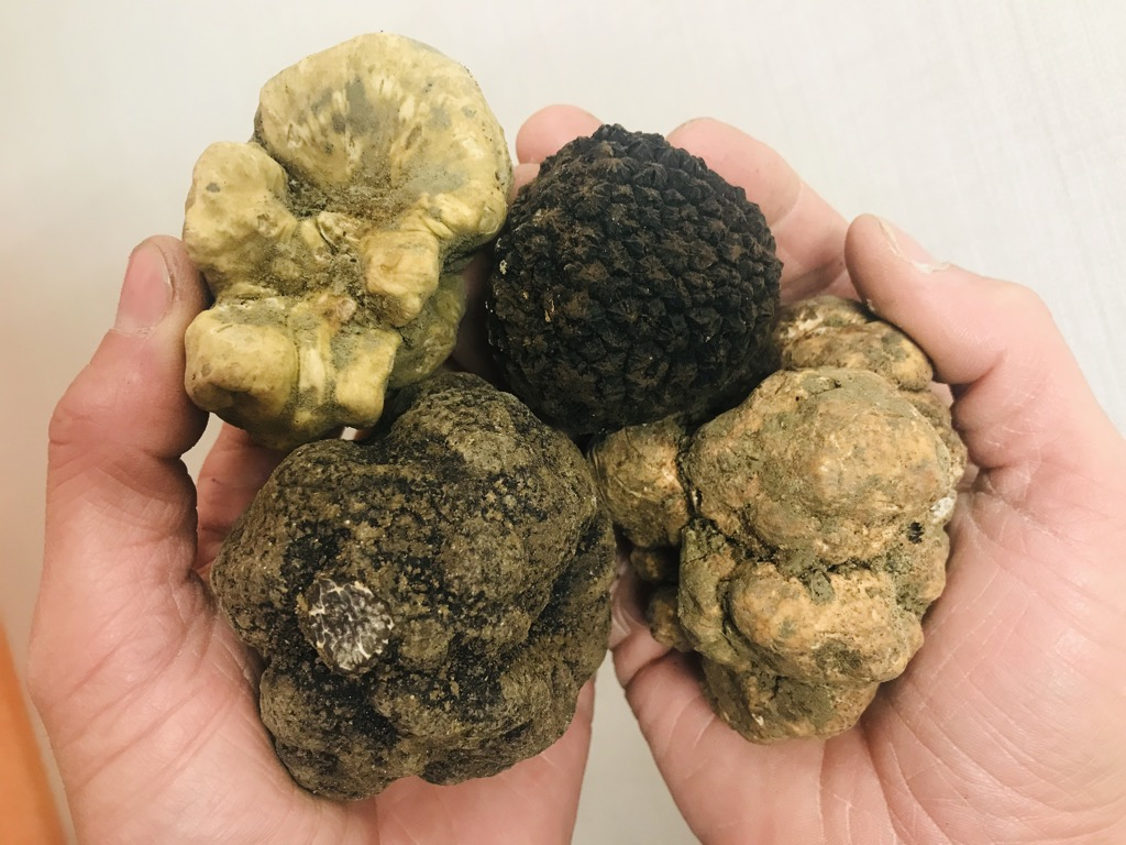 truffles from Abruzzo