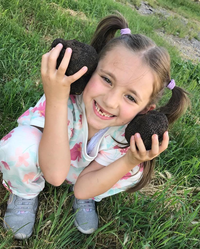 Summer truffle or scorzone